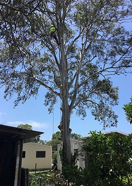 tree removal on the gold coast